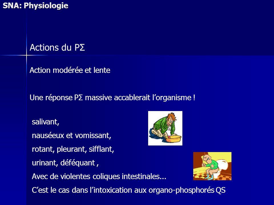 SNA: Physiologie Actions du PΣ Action modérée et lente Une réponse PΣ massive accablerait lorganisme ! salivant, nauséeux et vomissant, rotant, pleura