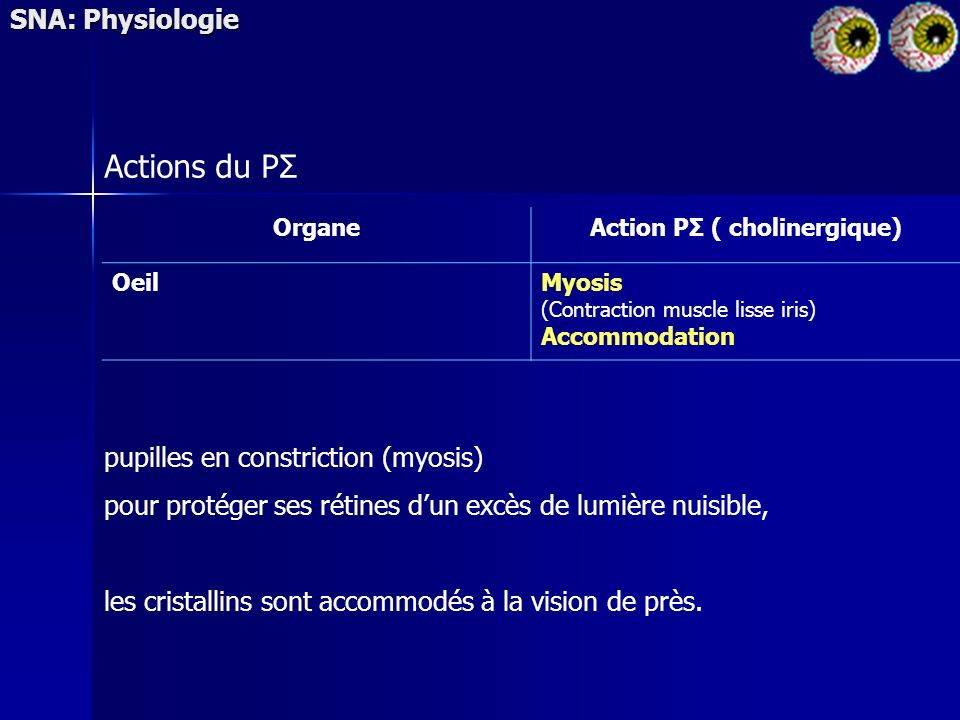 SNA: Physiologie Actions du PΣ OrganeAction PΣ ( cholinergique) OeilMyosis (Contraction muscle lisse iris) Accommodation pupilles en constriction (myo