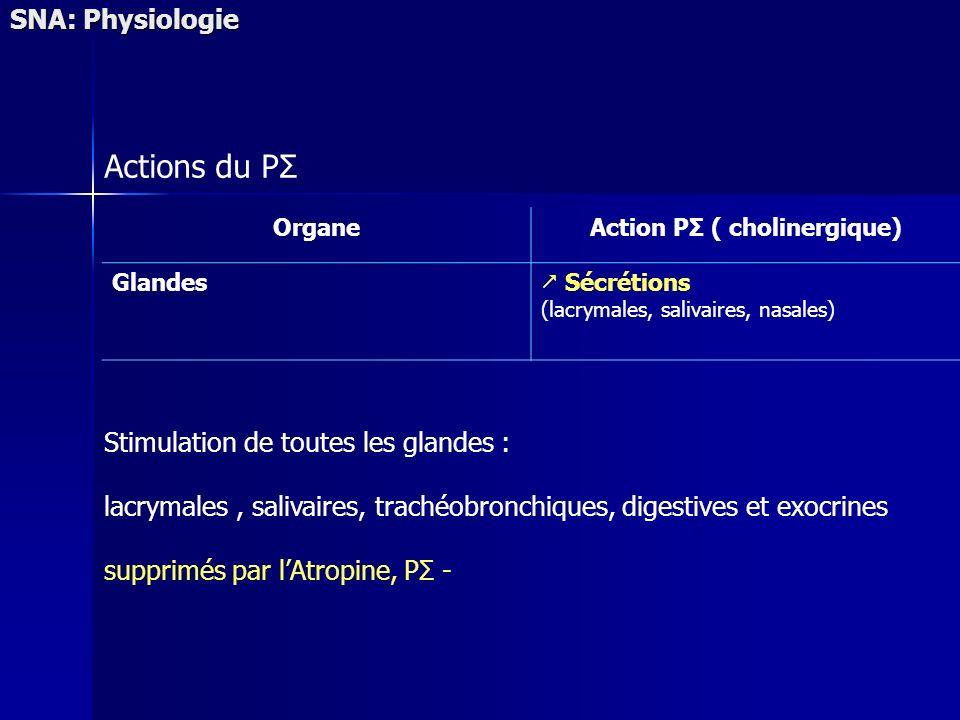 SNA: Physiologie Actions du PΣ OrganeAction PΣ ( cholinergique) Glandes Sécrétions (lacrymales, salivaires, nasales) Stimulation de toutes les glandes