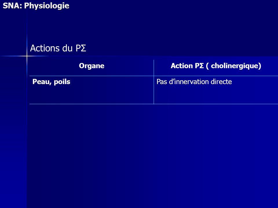 SNA: Physiologie Actions du PΣ OrganeAction PΣ ( cholinergique) Peau, poilsPas dinnervation directe