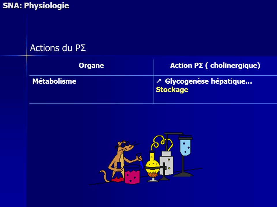 SNA: Physiologie Actions du PΣ OrganeAction PΣ ( cholinergique) Métabolisme Glycogenèse hépatique… Stockage