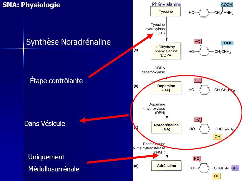 Synthèse Noradrénaline SNA: Physiologie Étape contrôlante Uniquement Médullosurrénale Dans Vésicule Phénylalanine