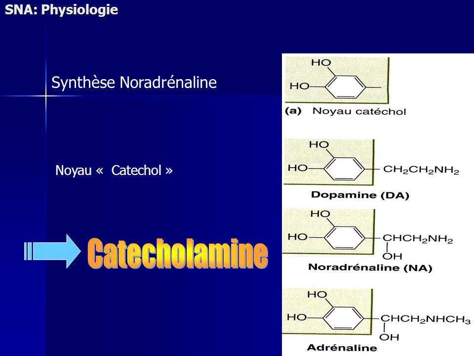 SNA: Physiologie Synthèse Noradrénaline Noyau « Catechol »