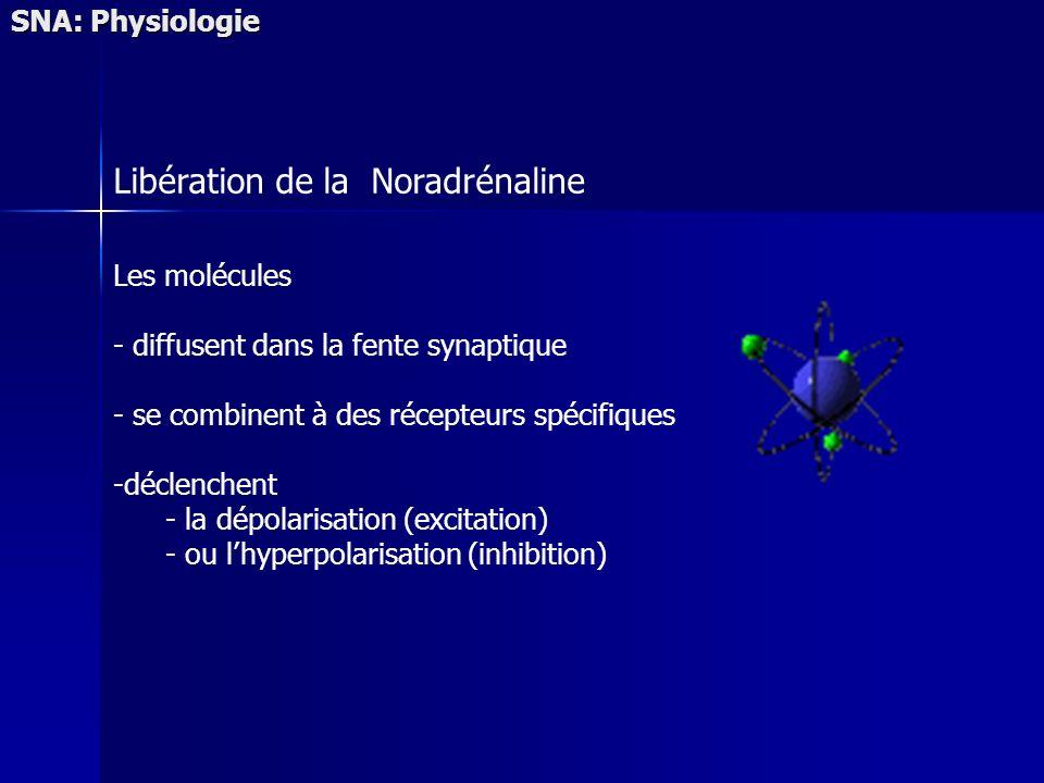 SNA: Physiologie Les molécules - diffusent dans la fente synaptique - se combinent à des récepteurs spécifiques -déclenchent - la dépolarisation (excitation) - ou lhyperpolarisation (inhibition) Libération de la Noradrénaline