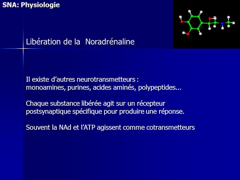 SNA: Physiologie Il existe dautres neurotransmetteurs : monoamines, purines, acides aminés, polypeptides... Chaque substance libérée agit sur un récep