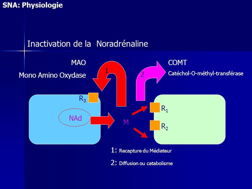 1: Recapture du Médiateur 2: Diffusion ou catabolisme NAd R1R1 R2R2 R3R3 M 2 1 SNA: Physiologie Inactivation de la Noradrénaline COMT Catéchol-O-méthyl-transférase MAO Mono Amino Oxydase