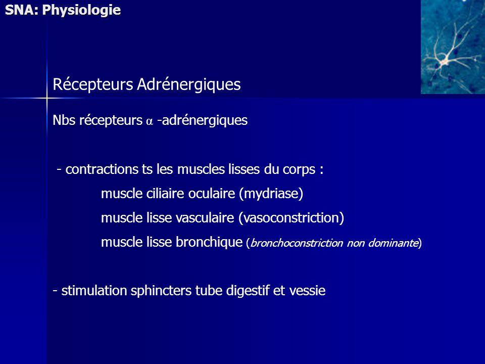 SNA: Physiologie Récepteurs Adrénergiques Nbs récepteurs α -adrénergiques - contractions ts les muscles lisses du corps : muscle ciliaire oculaire (my