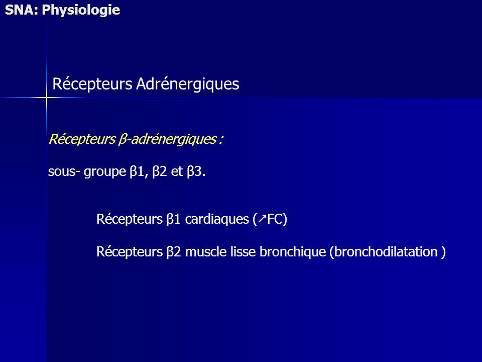 SNA: Physiologie Récepteurs Adrénergiques Récepteurs β-adrénergiques : sous- groupe β1, β2 et β3. Récepteurs β1 cardiaques ( FC) Récepteurs β2 muscle
