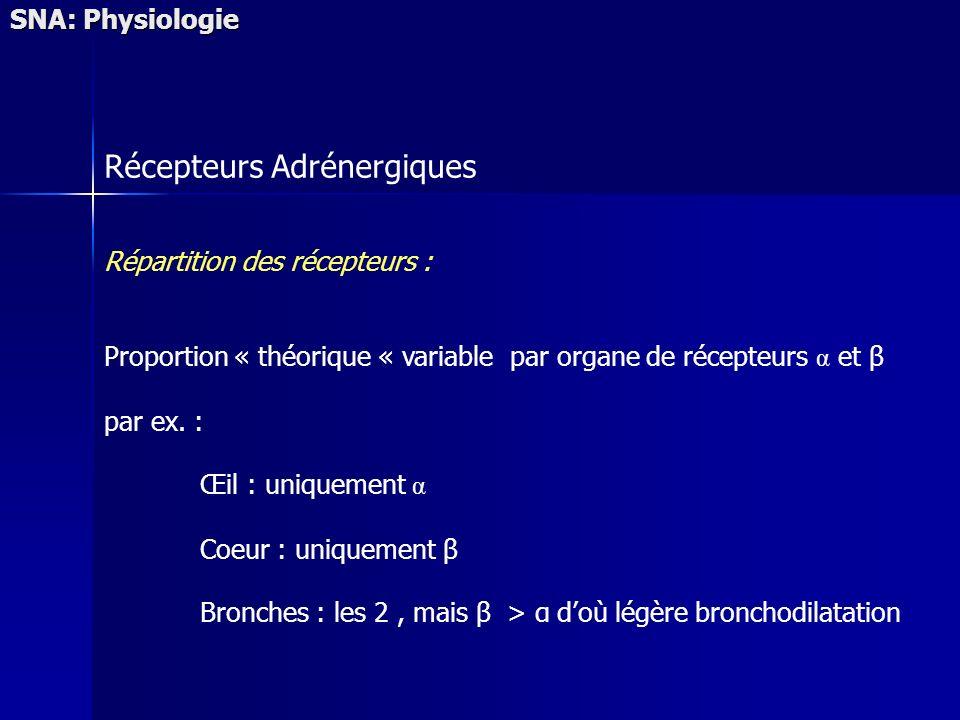 SNA: Physiologie Récepteurs Adrénergiques Répartition des récepteurs : Proportion « théorique « variable par organe de récepteurs α et β par ex. : Œil