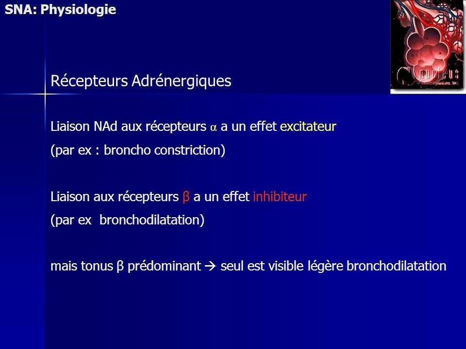 SNA: Physiologie Récepteurs Adrénergiques Liaison NAd aux récepteurs α a un effet excitateur (par ex : broncho constriction) Liaison aux récepteurs β a un effet inhibiteur (par ex bronchodilatation) mais tonus β prédominant seul est visible légère bronchodilatation
