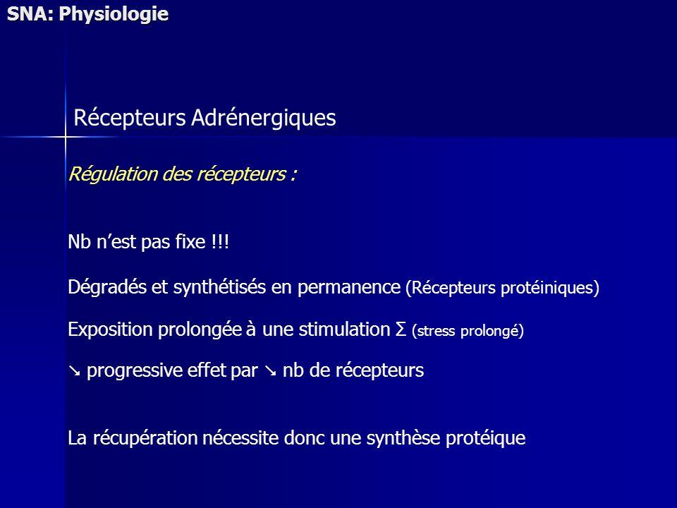 SNA: Physiologie Récepteurs Adrénergiques Régulation des récepteurs : Nb nest pas fixe !!! Dégradés et synthétisés en permanence (Récepteurs protéiniq