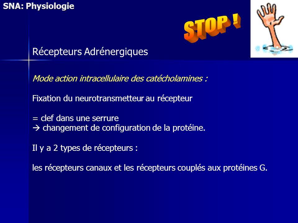 SNA: Physiologie Récepteurs Adrénergiques Mode action intracellulaire des catécholamines : Fixation du neurotransmetteur au récepteur = clef dans une
