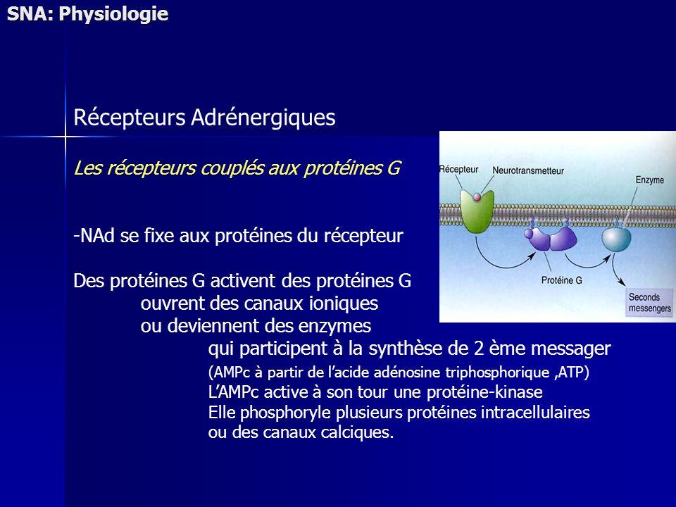 SNA: Physiologie Récepteurs Adrénergiques Les récepteurs couplés aux protéines G -NAd se fixe aux protéines du récepteur Des protéines G activent des protéines G ouvrent des canaux ioniques ou deviennent des enzymes qui participent à la synthèse de 2 ème messager (AMPc à partir de lacide adénosine triphosphorique,ATP) LAMPc active à son tour une protéine-kinase Elle phosphoryle plusieurs protéines intracellulaires ou des canaux calciques.