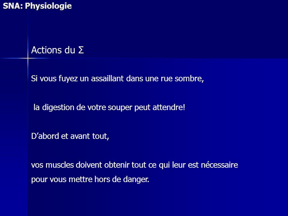 SNA: Physiologie Actions du Σ Si vous fuyez un assaillant dans une rue sombre, la digestion de votre souper peut attendre.