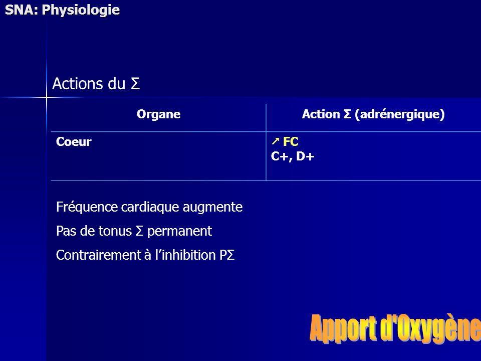 SNA: Physiologie OrganeAction Σ (adrénergique) Coeur FC C+, D+ Fréquence cardiaque augmente Pas de tonus Σ permanent Contrairement à linhibition PΣ Ac
