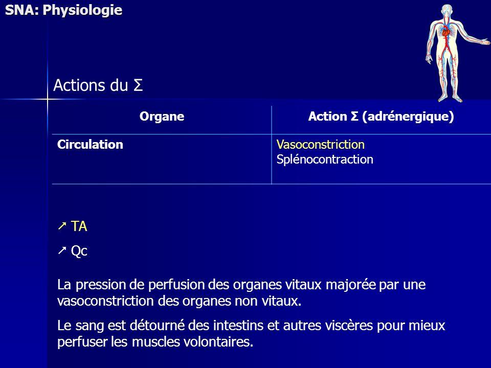 SNA: Physiologie Actions du Σ OrganeAction Σ (adrénergique) CirculationVasoconstriction Splénocontraction TA Qc La pression de perfusion des organes vitaux majorée par une vasoconstriction des organes non vitaux.