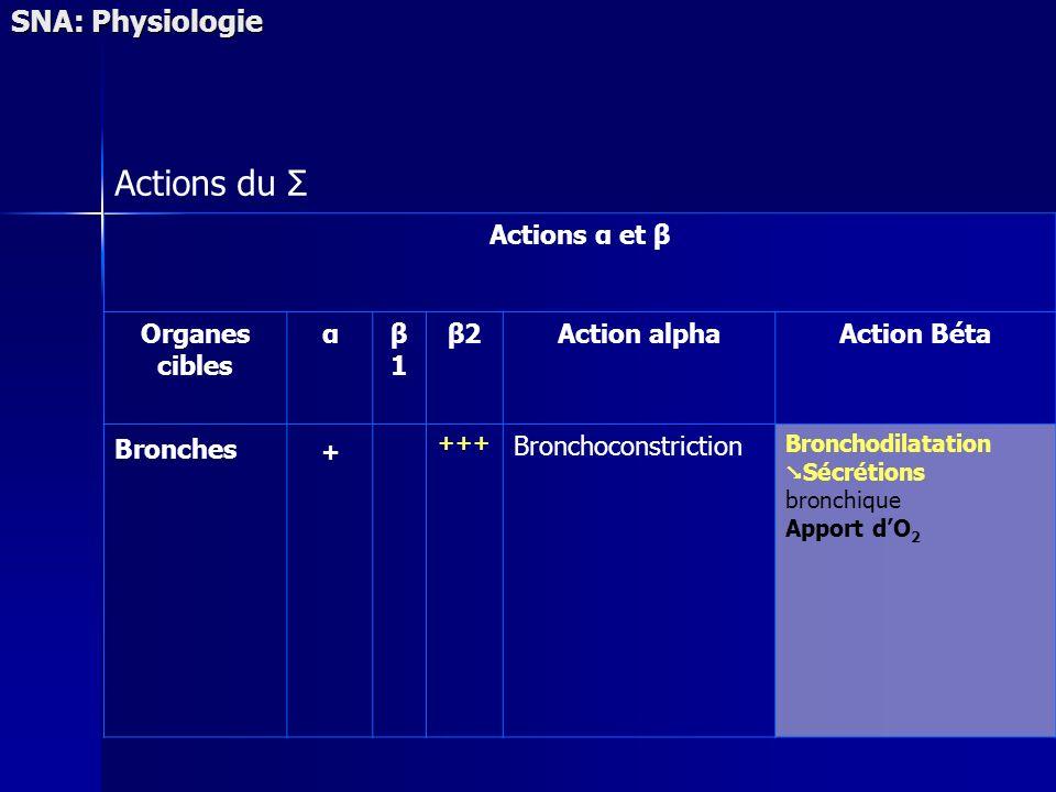 SNA: Physiologie Actions du Σ Actions α et β Organes cibles αβ1β1 β2Action alphaAction Béta Bronches + +++ Bronchoconstriction Bronchodilatation Sécré