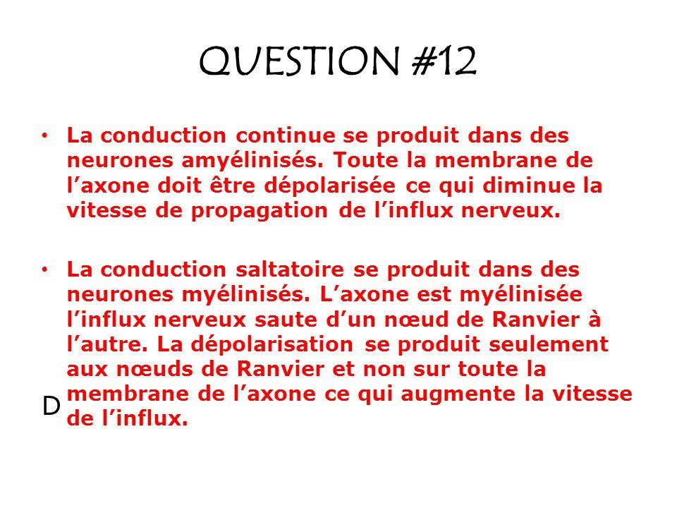 QUESTION #12 La conduction continue se produit dans des neurones amyélinisés. Toute la membrane de laxone doit être dépolarisée ce qui diminue la vite