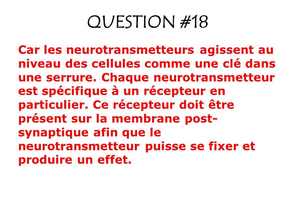 QUESTION #18 Car les neurotransmetteurs agissent au niveau des cellules comme une clé dans une serrure. Chaque neurotransmetteur est spécifique à un r
