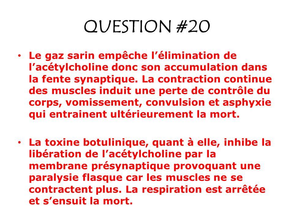 QUESTION #20 Le gaz sarin empêche lélimination de lacétylcholine donc son accumulation dans la fente synaptique. La contraction continue des muscles i