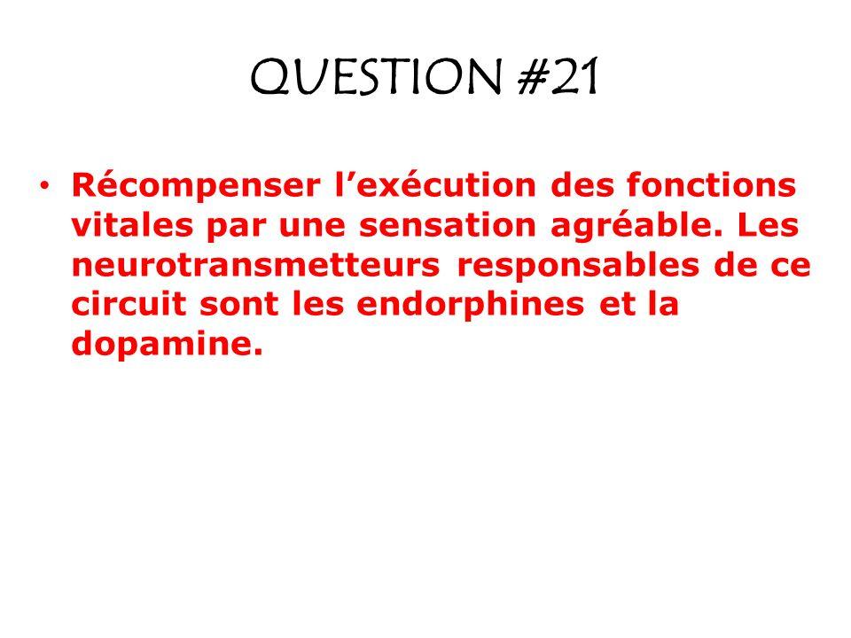 QUESTION #21 Récompenser lexécution des fonctions vitales par une sensation agréable. Les neurotransmetteurs responsables de ce circuit sont les endor