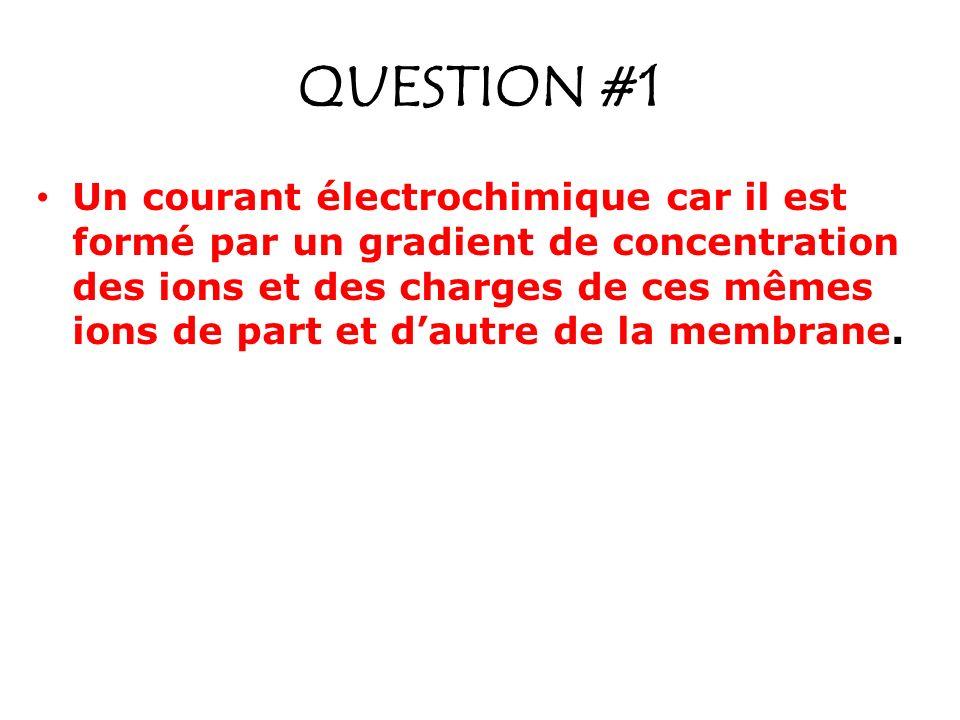 QUESTION #1 Un courant électrochimique car il est formé par un gradient de concentration des ions et des charges de ces mêmes ions de part et dautre d
