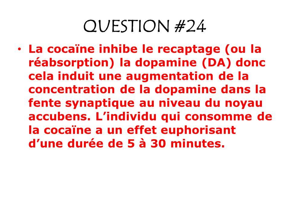 QUESTION #24 La cocaïne inhibe le recaptage (ou la réabsorption) la dopamine (DA) donc cela induit une augmentation de la concentration de la dopamine