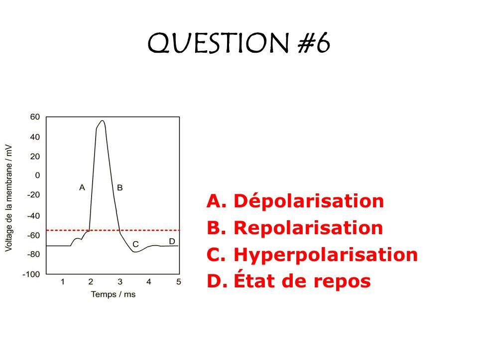 QUESTION #6 A.Dépolarisation B.Repolarisation C.Hyperpolarisation D.État de repos