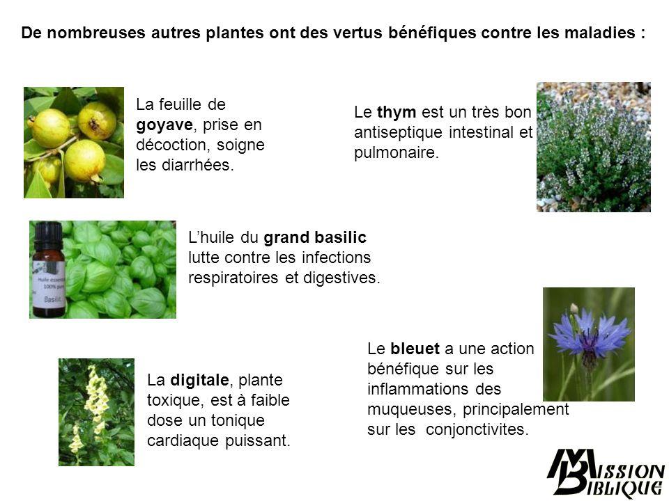 La racine du gingembre est préconisée contre les nausées. La fleur dhibiscus séchée (oseille de Guinée ou Bissap) abaisse la tension artérielle. Les f