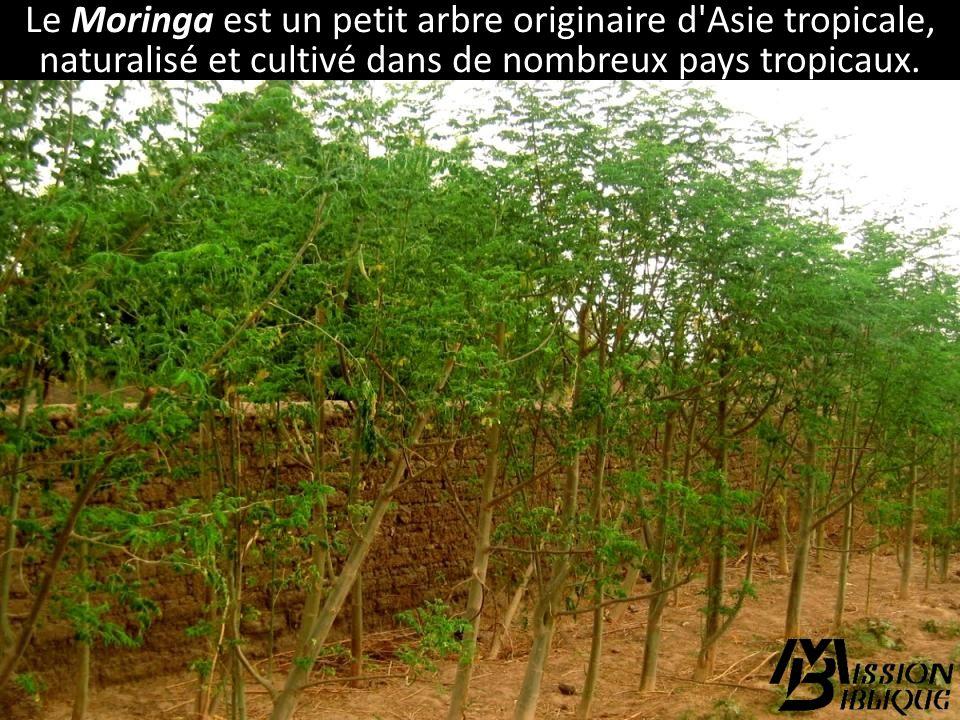 En Côte dIvoire, notre missionnaire Étienne Loppin encourage la culture des plantes qui répondent aux besoins de la population.