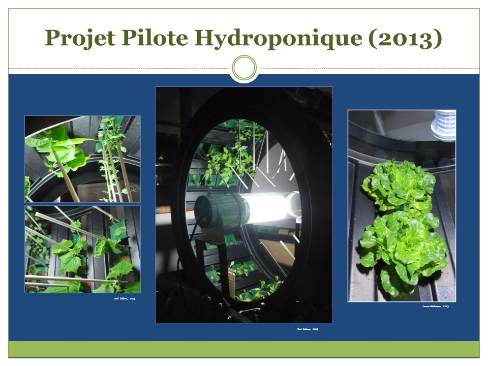 Projet Pilote Hydroponique (2013) Neil Sellors, 2013 Jason Aitcheson, 2013 Neil Sellors, 2013