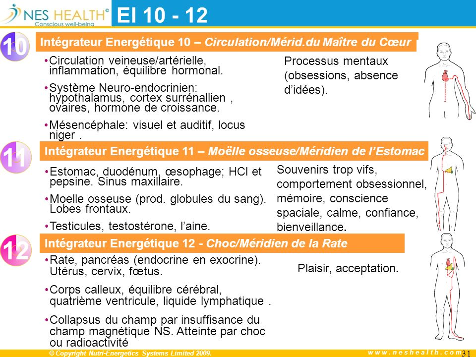 © Copyright Nutri-Energetics Systems Limited 2009. www.neshealth.com Circulation veineuse/artérielle, inflammation, équilibre hormonal. Système Neuro-
