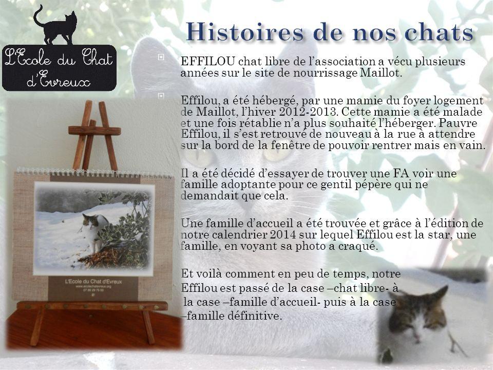 EFFILOU chat libre de lassociation a vécu plusieurs années sur le site de nourrissage Maillot.