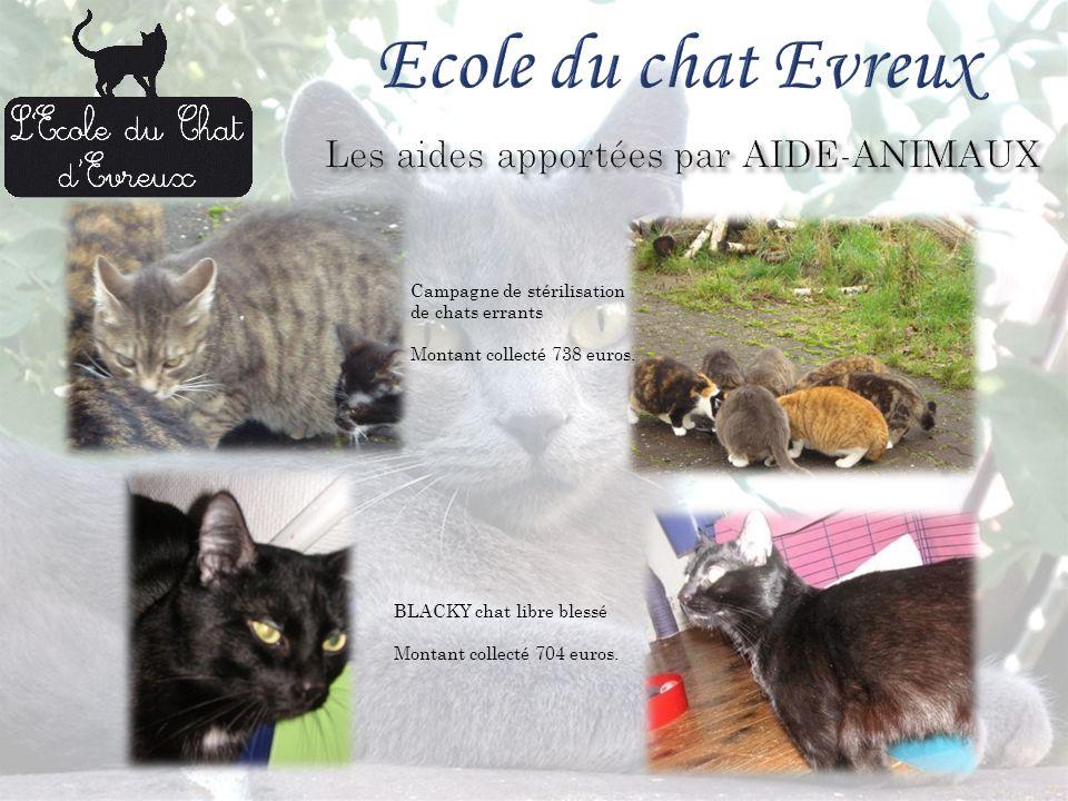 Campagne de stérilisation de chats errants Montant collecté 738 euros.