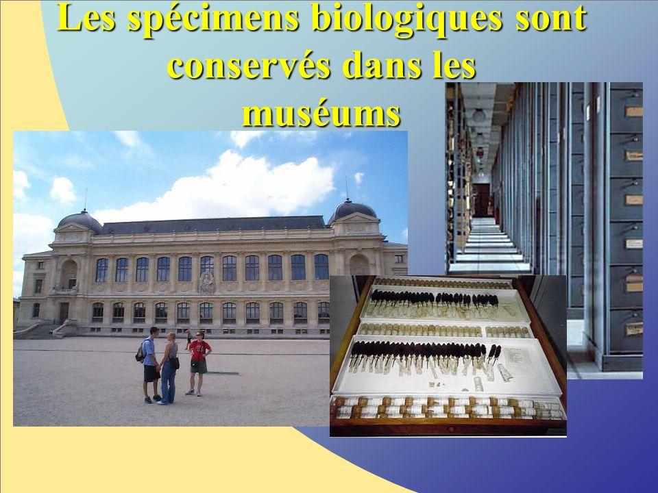 Les spécimens biologiques sont conservés dans les muséums