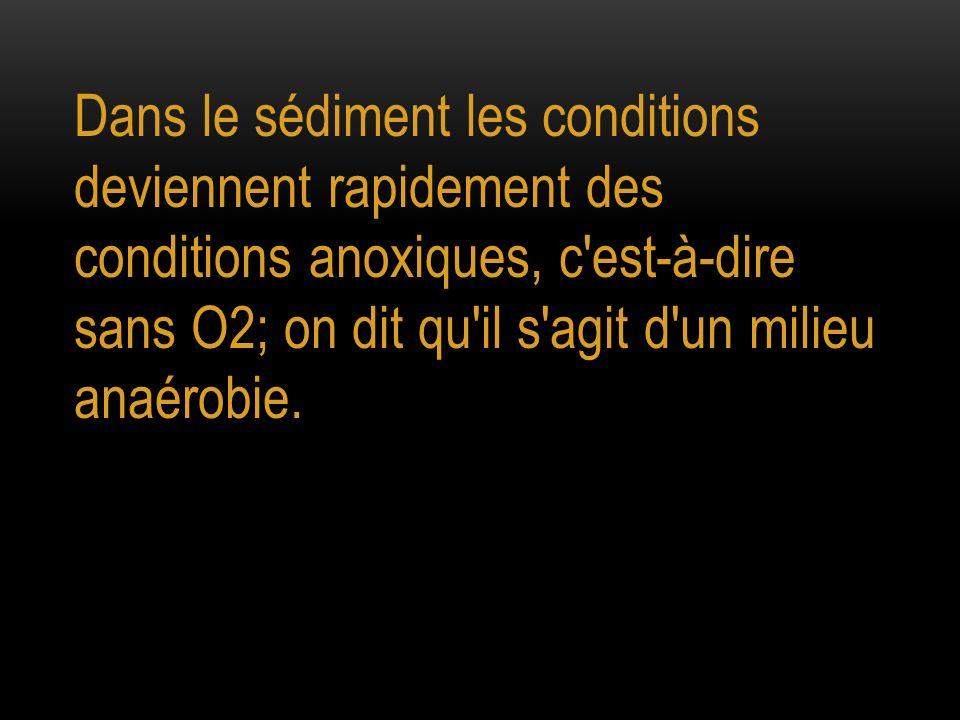 Dans le sédiment les conditions deviennent rapidement des conditions anoxiques, c'est-à-dire sans O2; on dit qu'il s'agit d'un milieu anaérobie.