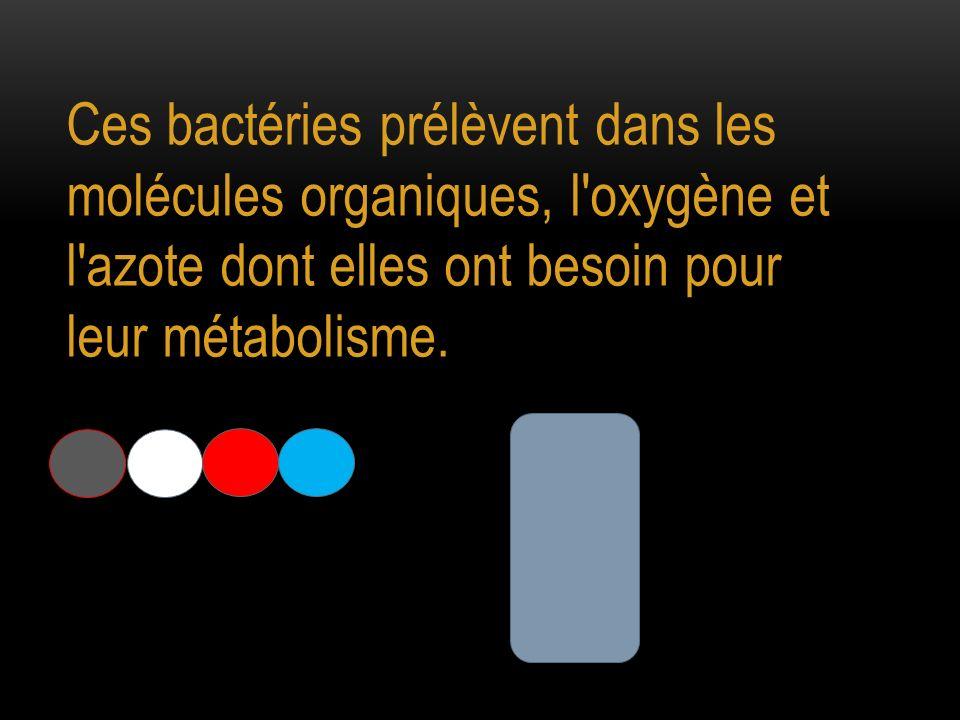 Ces bactéries prélèvent dans les molécules organiques, l'oxygène et l'azote dont elles ont besoin pour leur métabolisme.