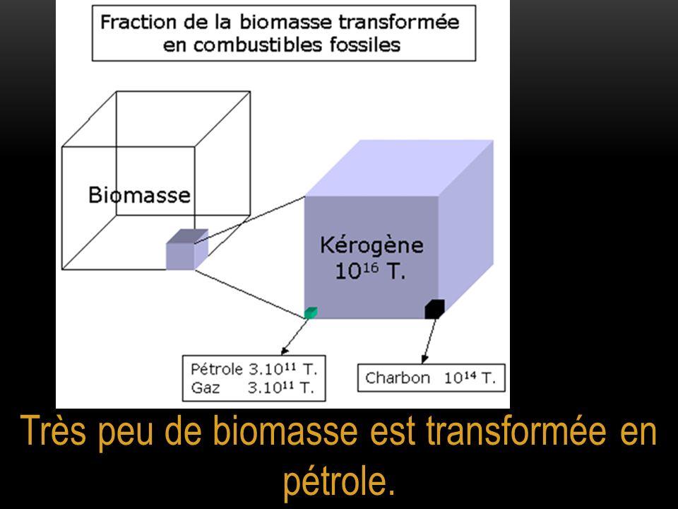 Très peu de biomasse est transformée en pétrole.
