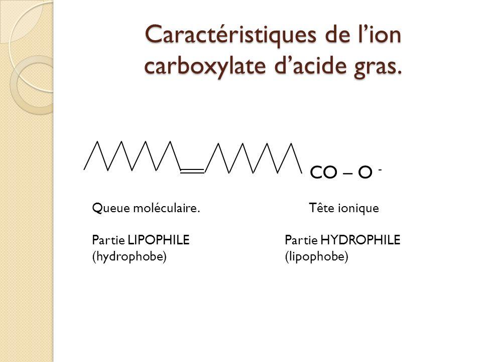 Caractéristiques de lion carboxylate dacide gras. CO – O - Queue moléculaire.