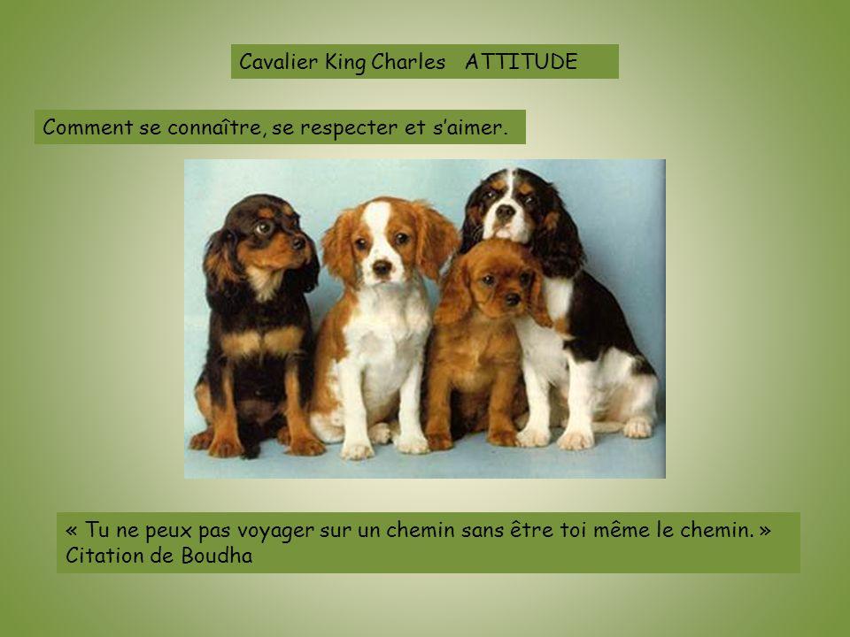 Cavalier King Charles ATTITUDE Comment se connaître, se respecter et saimer. « Tu ne peux pas voyager sur un chemin sans être toi même le chemin. » Ci