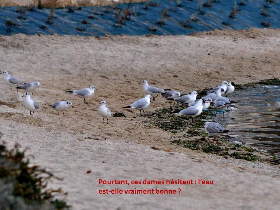 Vous voyez ? Cest un vrai jour de printemps. Les oiseaux sont déchaînés, les trilles éclatent de partout !