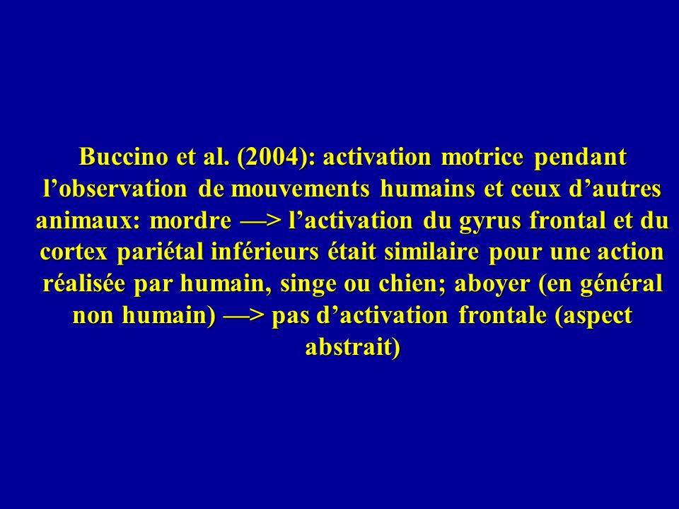 Buccino et al. (2004): activation motrice pendant lobservation de mouvements humains et ceux dautres animaux: mordre > lactivation du gyrus frontal et