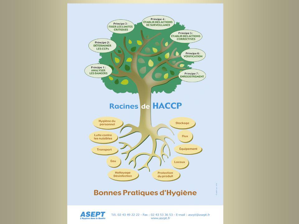 Arbre HACCP