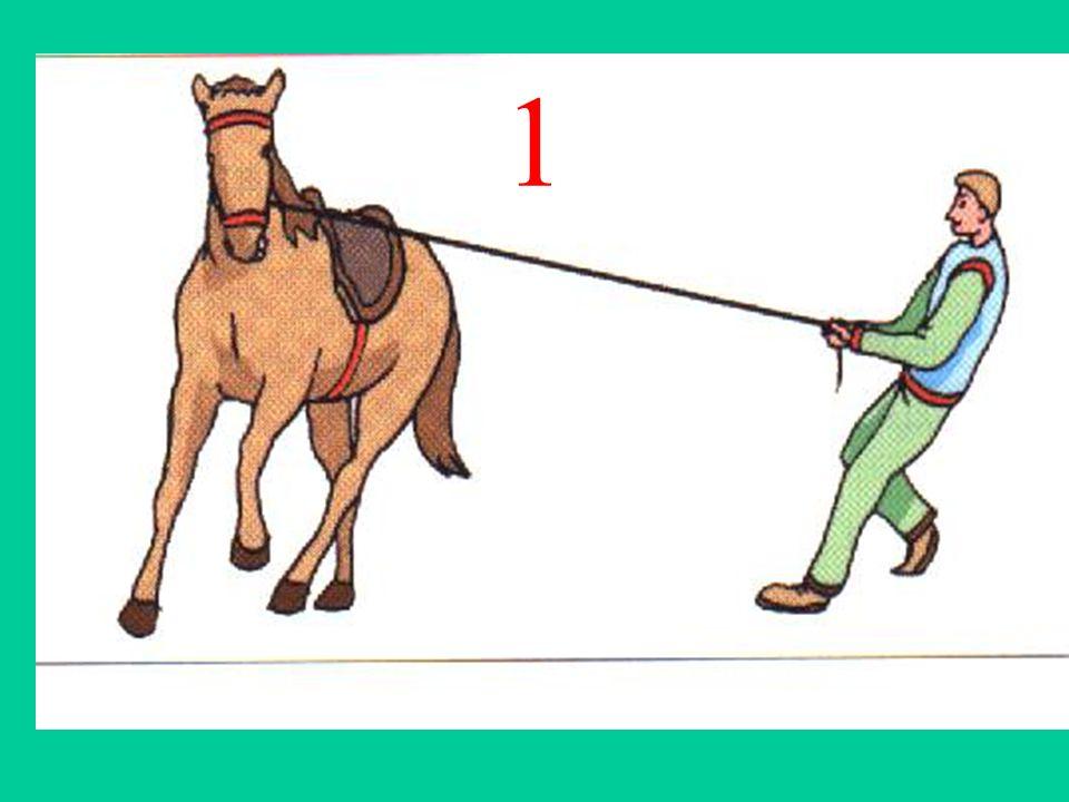 Réponse 1 Exerce: lhomme subit: le cheval Modification de la trajectoire Action de contact