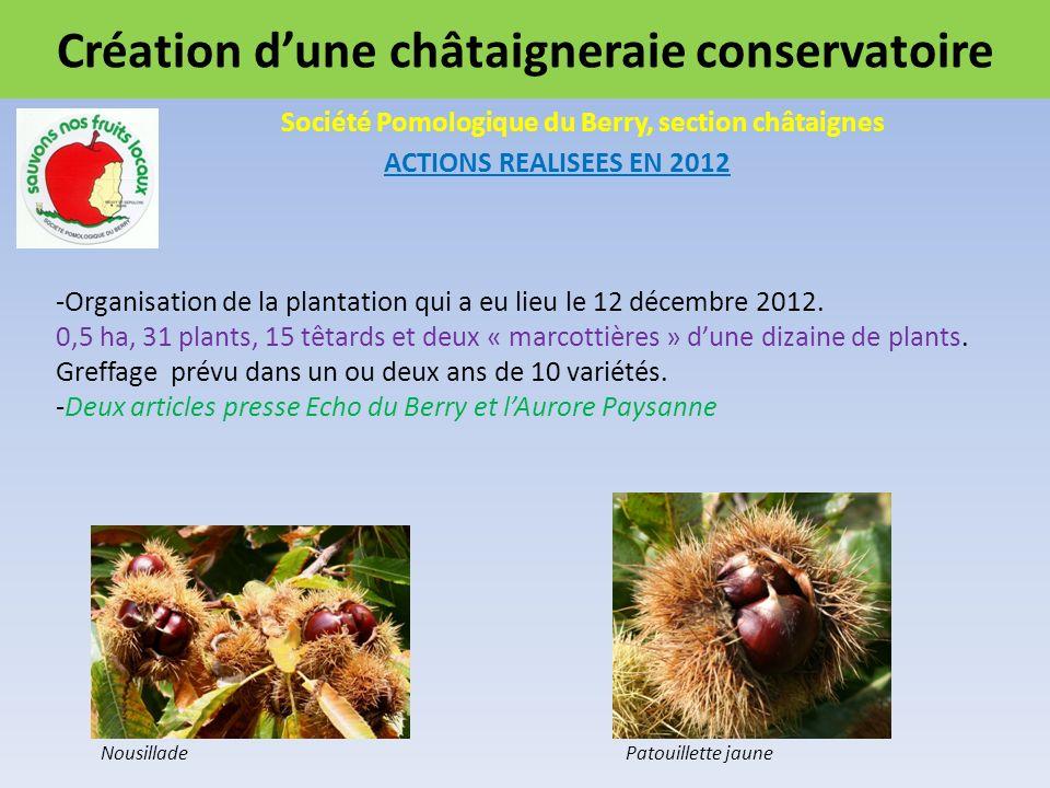 Création dune châtaigneraie conservatoire Société Pomologique du Berry, section châtaignes ACTIONS REALISEES EN 2012 NousilladePatouillette jaune -Organisation de la plantation qui a eu lieu le 12 décembre 2012.