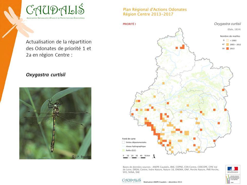 Actualisation de la répartition des Odonates de priorité 1 et 2a en région Centre : Oxygastra curtisii © J.P. Boudot