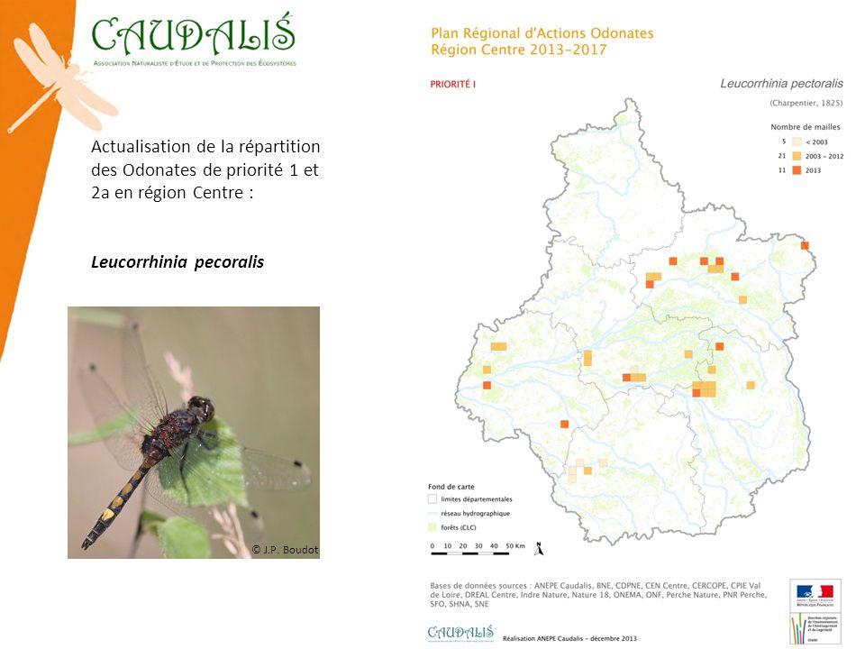 Actualisation de la répartition des Odonates de priorité 1 et 2a en région Centre : Leucorrhinia pecoralis © J.P. Boudot