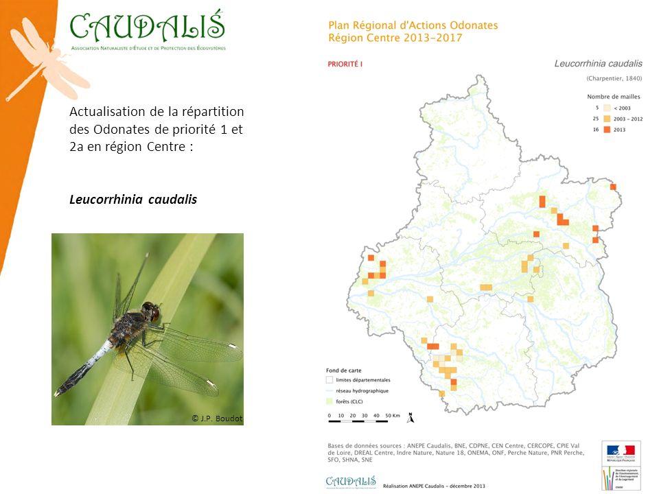 Actualisation de la répartition des Odonates de priorité 1 et 2a en région Centre : Leucorrhinia caudalis © J.P. Boudot