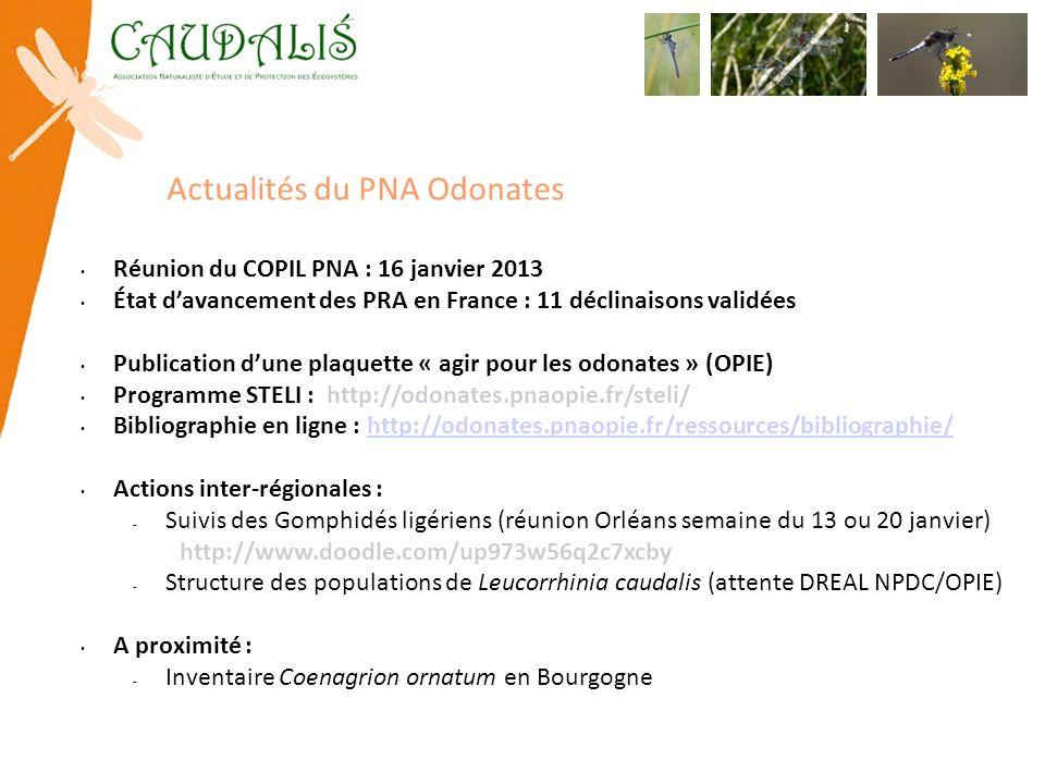 Actualités du PNA Odonates Réunion du COPIL PNA : 16 janvier 2013 État davancement des PRA en France : 11 déclinaisons validées Publication dune plaqu