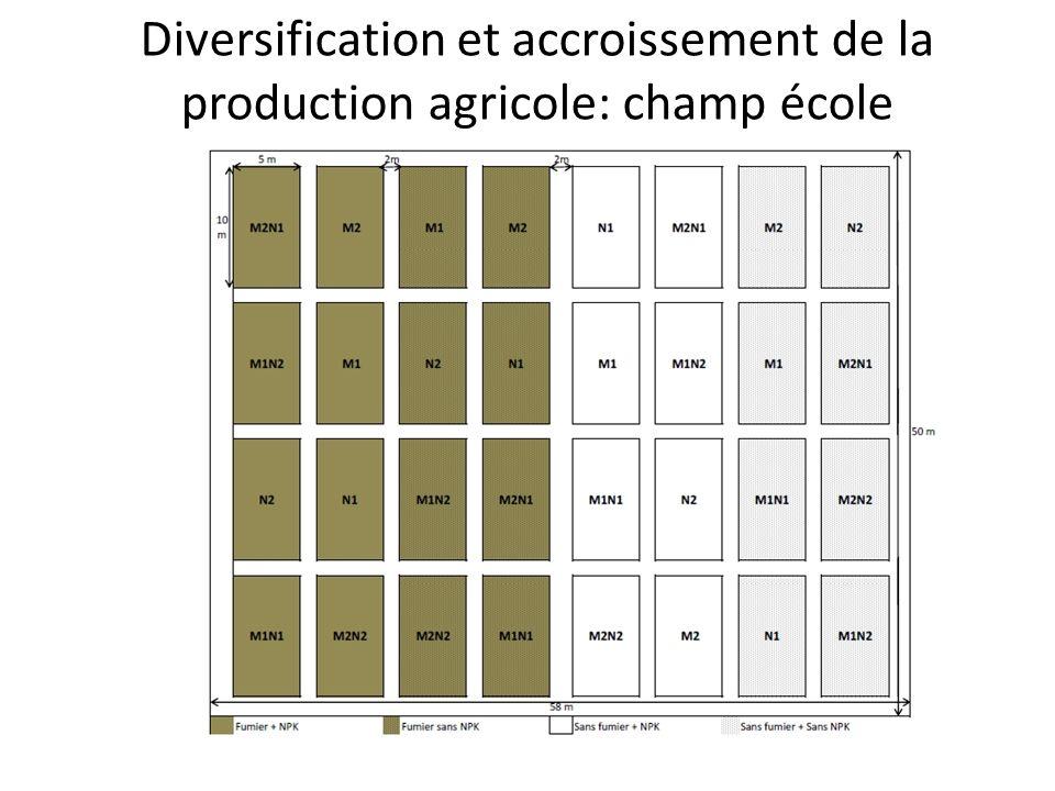 Diversification et accroissement de la production agricole: champ école